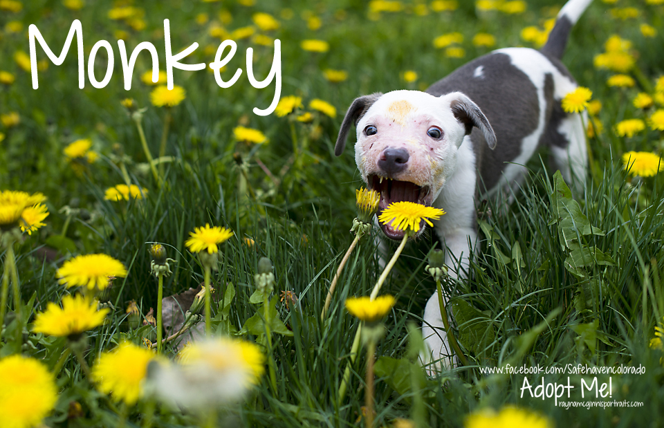 Monkey - Safe Haven Rescue