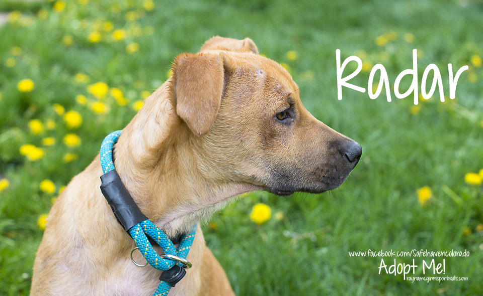 Radar - Safe Haven Rescue