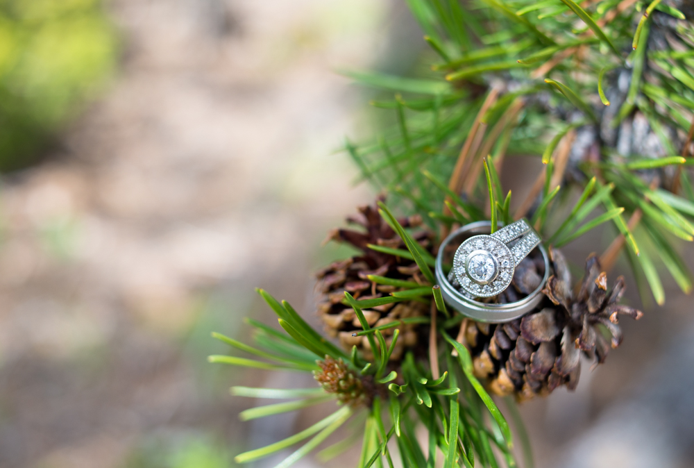 Sapphire Point Wedding Photography - Ring shot on pine cone
