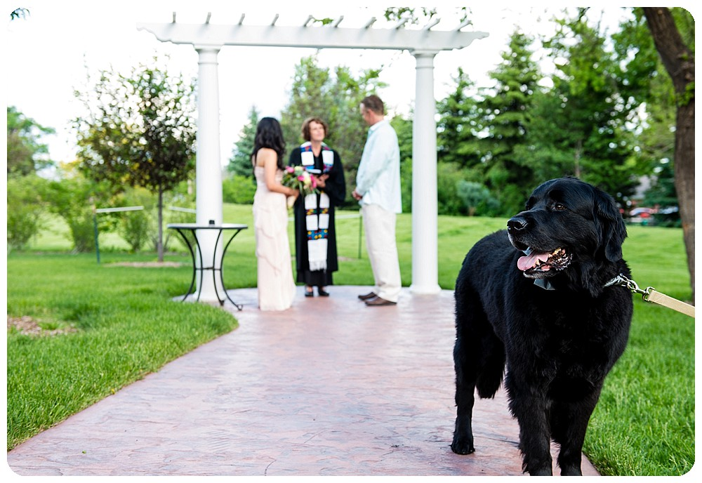 Dog in a Denver Elopement at the Richards Hart Estate