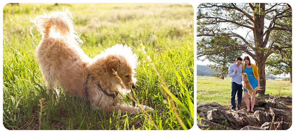 Elk Meadow Engagement Session with a dog