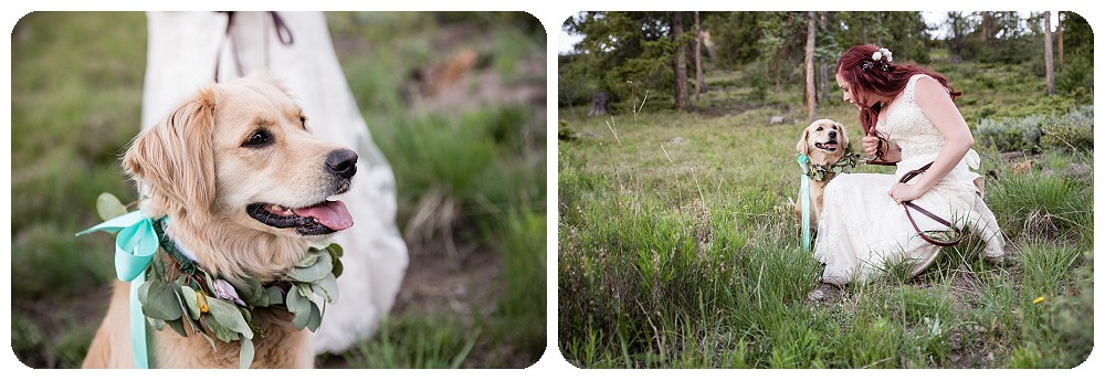 Bride and dog by Sapphire Point Wedding Photographer, rayna mcginnis