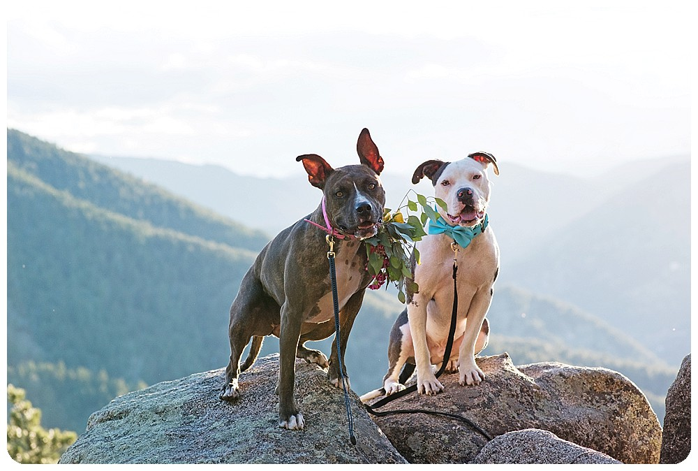 Puppy photos at Dog elopement