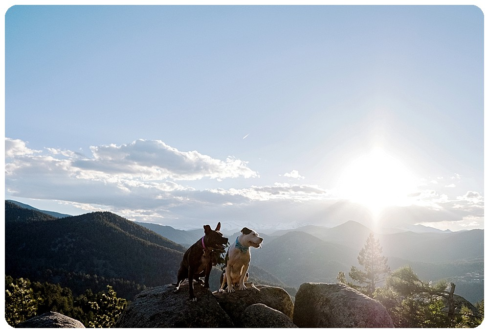 Beautiful rocky mountain dog elopement