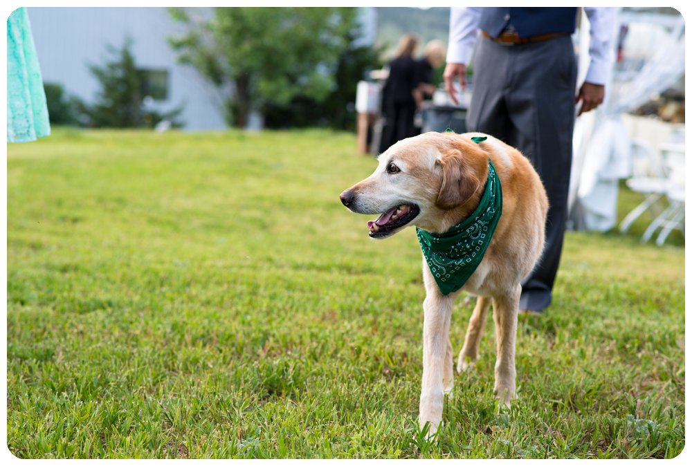 Dog at a Loveland Colorado Wedding