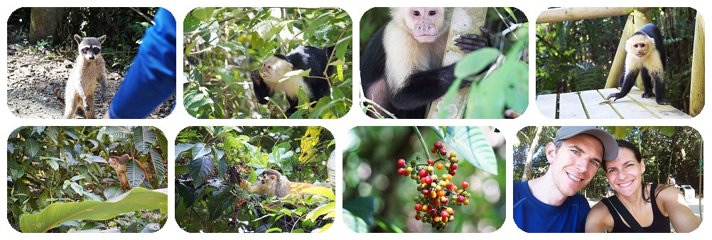 Some of the wild life at Manual Antonio National park including Monkeys