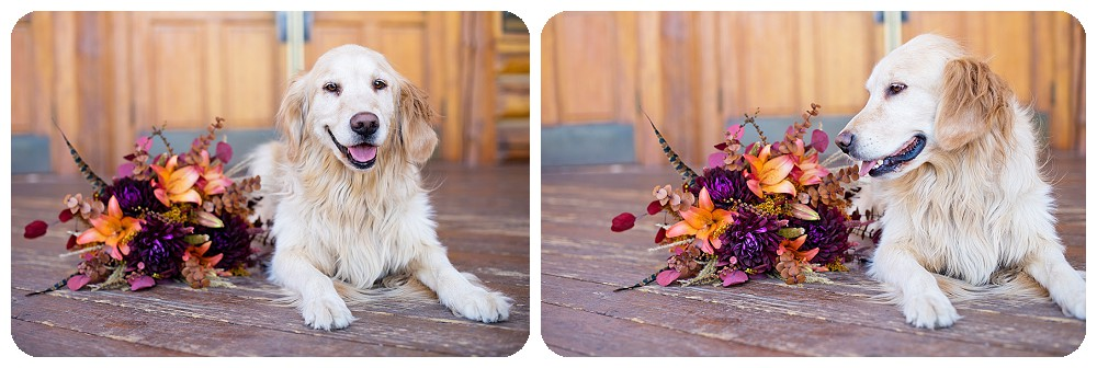 Golden retriever with wedding bouquets at Evergreen Lake House