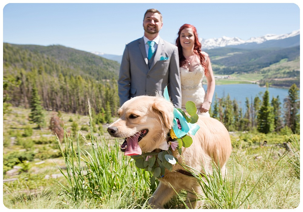 Bride, Groom and their dog at Sapphire Point
