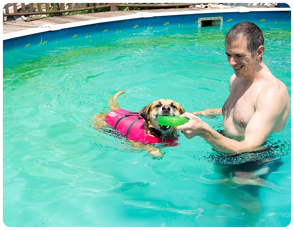 Dog swimming after toy