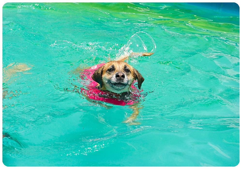 Dog swimming in life jacket from outward hound