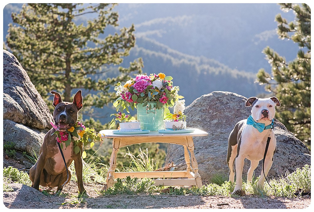 Dog Wedding Dinner Tablescape
