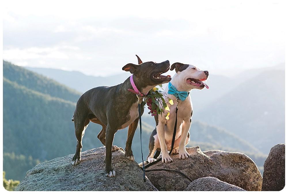 Puppy photos on the mountain top