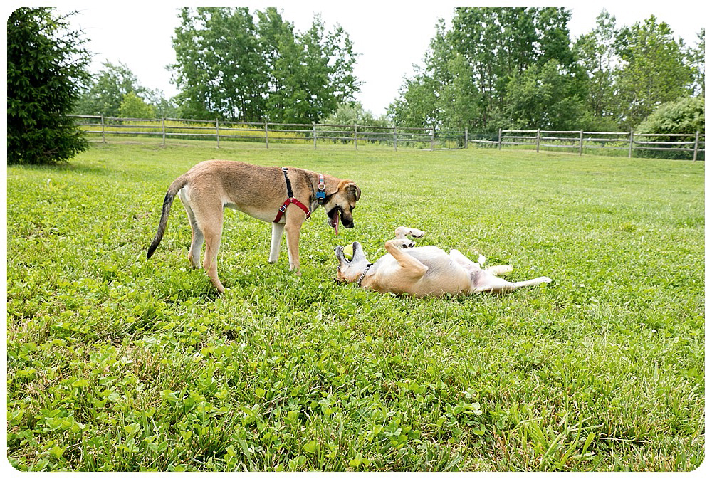 Savanna and Stitch playing in Pittsburgh by Rayna McGinnis, US Travel Photographer