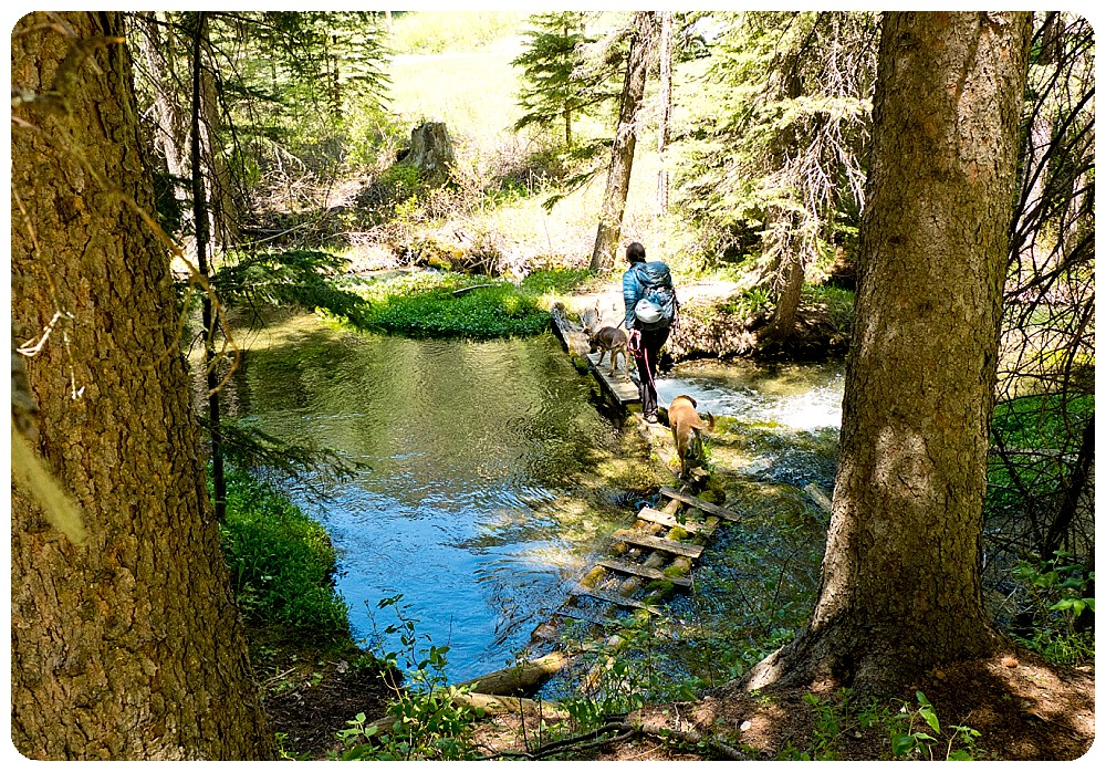 US Travel Photographer Rayna Mcginnis doing a water crossing with her two dogs.