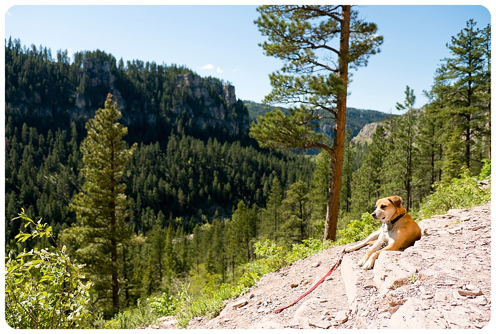 Savannah dog at Spearfish Canyon, SD
