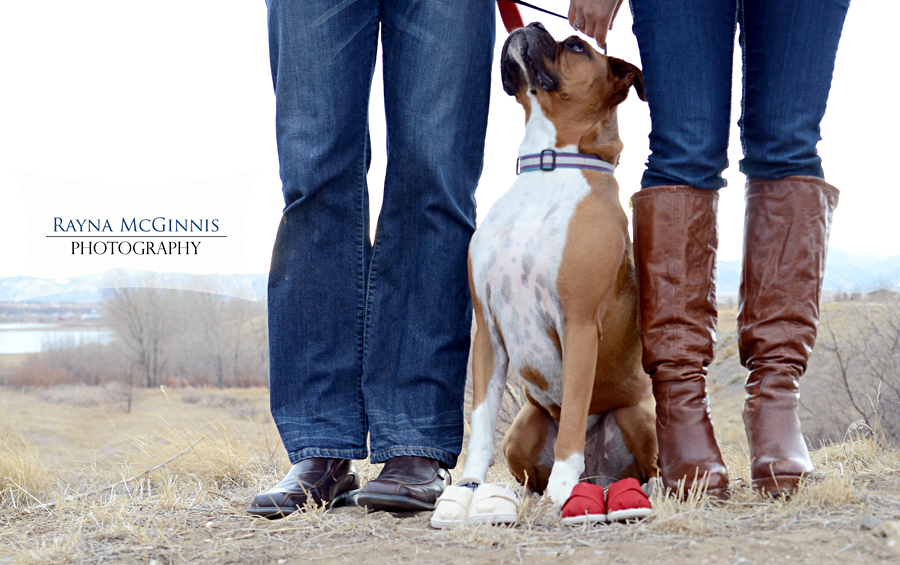 Denver Pregnancy Announcement Photography at Standley Lake in – Birth Announcement with Dog