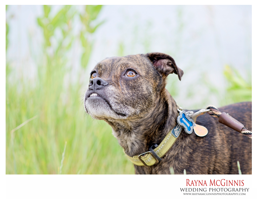 Engagement Session at Chatfield State Park with dog